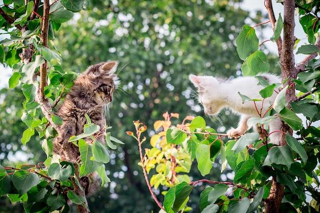 Twee jonge katten klommen hoog in de boom