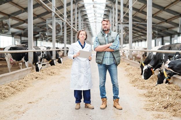 Twee jonge zelfverzekerde boeren in werkkleding staan voor de camera in het gangpad tussen twee lange koestallen
