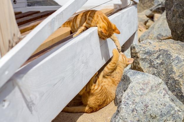 Twee katten die in de zomer op een strand spelen