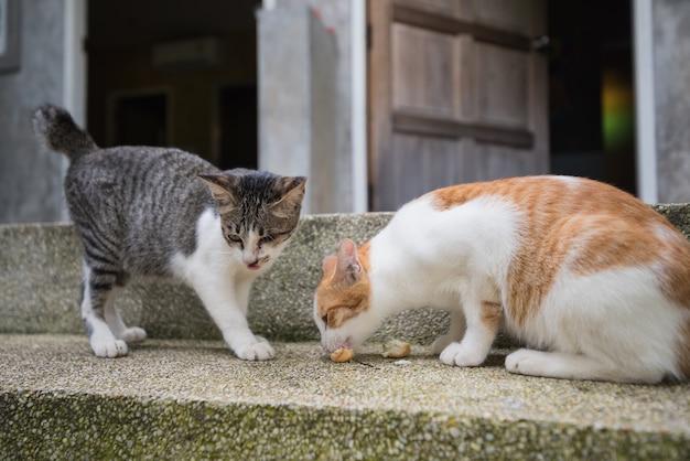Twee katten die op de vloer eten