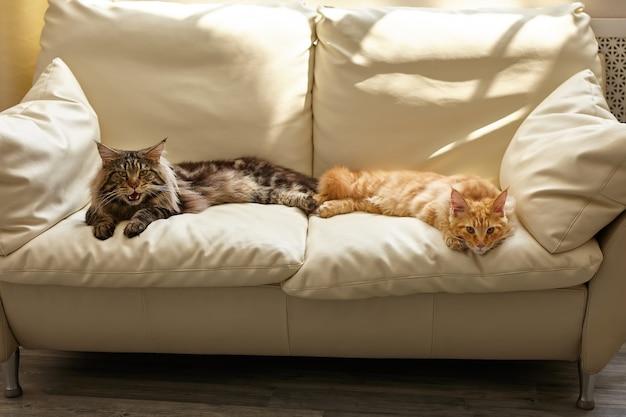 Twee katten die op witte bank thuis liggen i