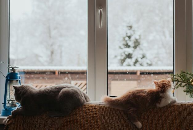 Twee katten liggen op de rug van de bank en kijken uit het raam
