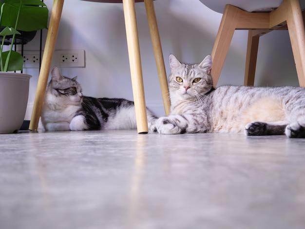 Twee katten op vloer en luchtzuiveringsboom monstera, sansevieria in woonkamer