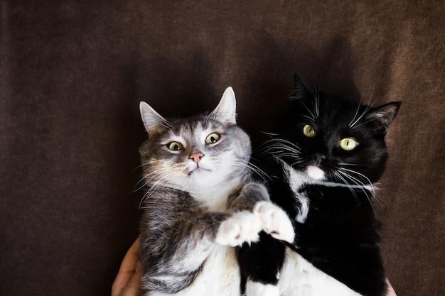 Twee katten samen grijs en zwart en wit