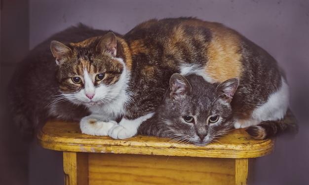 Twee katten slapen in het huis
