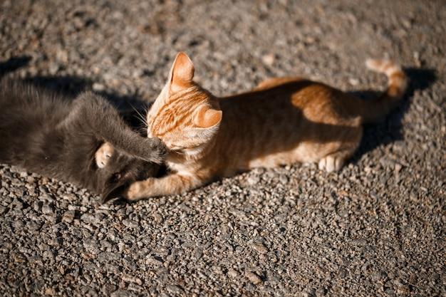 Twee katten zwart en rood spelen met elkaar in de zon