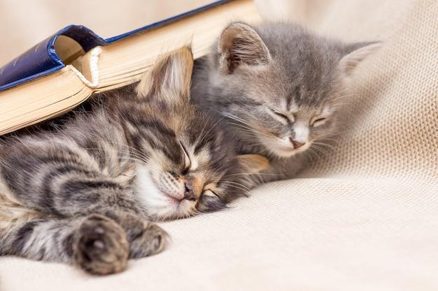 Twee kittens bedekt met een boek slapen naast. rust na school