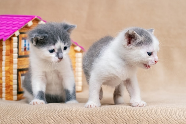 Twee kittens bij het speelgoedhuis in de kamer