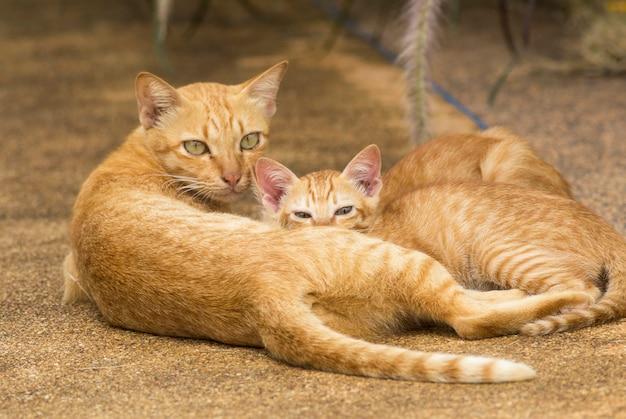 Twee kittens slapen naast hun moeder.