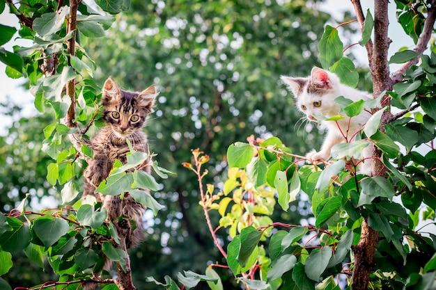 Twee kittens spelen in de boom