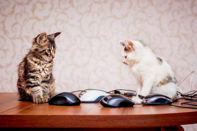 Twee kittens zitten in de buurt van computermuizen. werk op kantoor op de computer