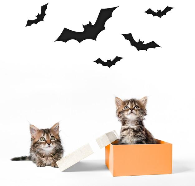 Twee kittens zitten in een oranje doos en naast elkaar en kijken omhoog naar de vleermuizen