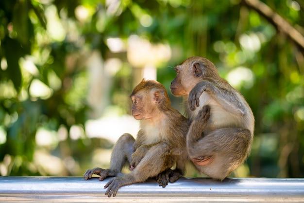 Twee kleine aapjes knuffelen zittend op een hek