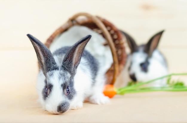 Twee kleine babykonijnen met mand en wortel