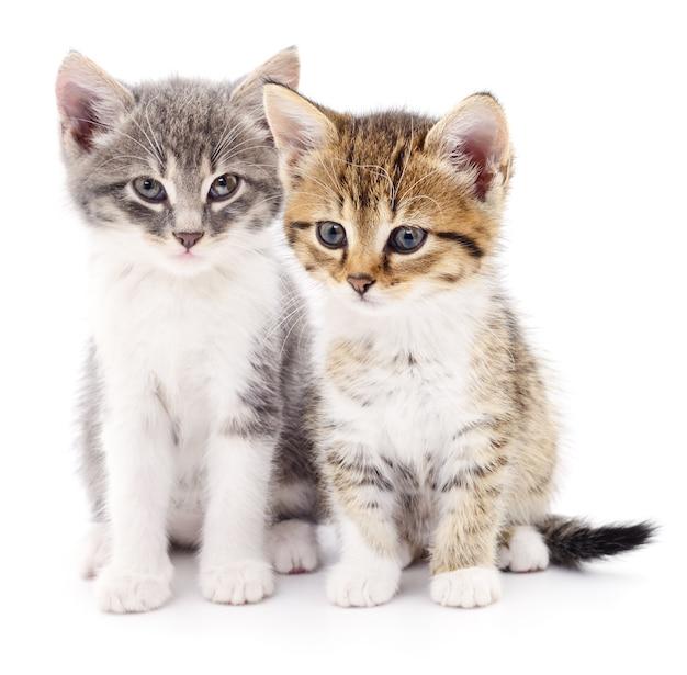 Twee kleine geïsoleerde katjes