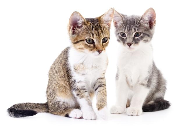 Twee kleine geïsoleerde katjes.