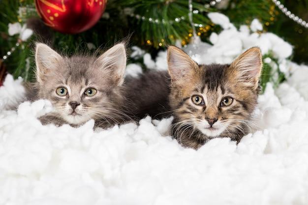 Twee kleine grijze kittens verstoppen zich in de sneeuw bij de kerstboom.