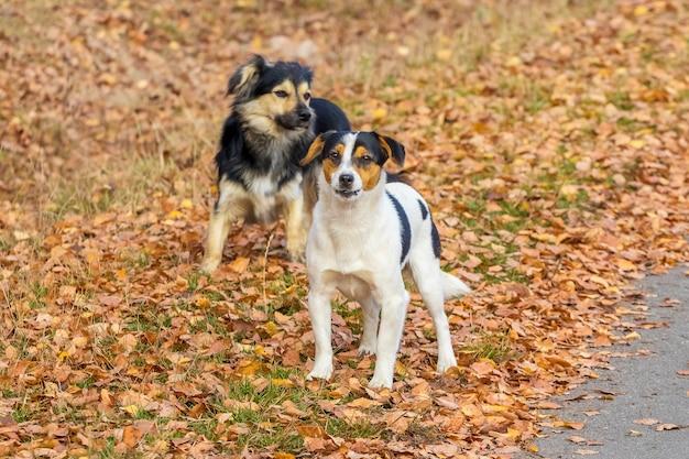 Twee kleine honden op een wandeling in het herfstpark