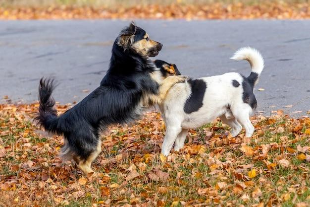 Twee kleine honden spelen in het park op herfstblad