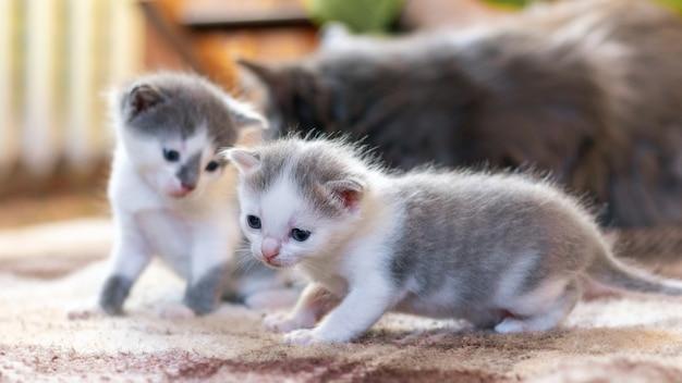 Twee kleine katjes en hun moeder in de kamer