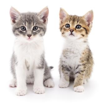 Twee kleine katjes op een wit