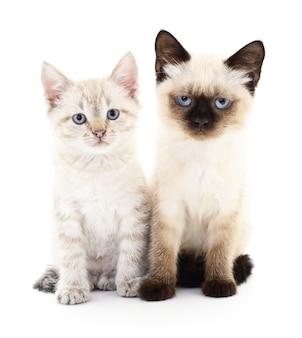 Twee kleine katjes op een witte achtergrond.