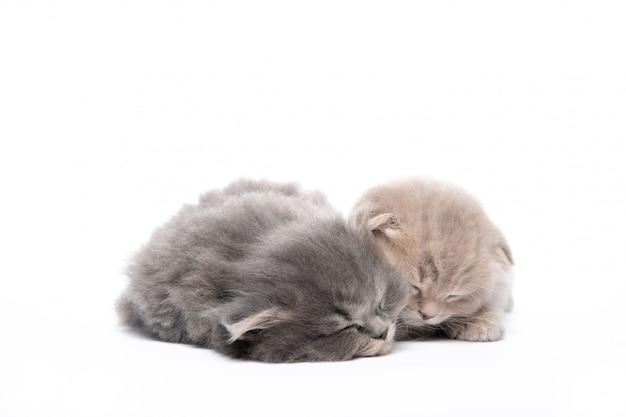 Twee kleine katjes slapen op een geïsoleerd wit. ontspanning. kittens