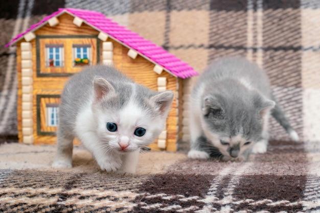 Twee kleine katjes spelen in de buurt van het speelgoedhuis