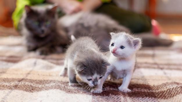 Twee kleine katjes spelen naast hun moederkat