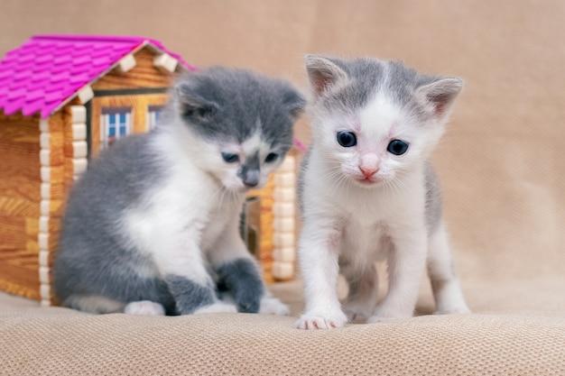 Twee kleine katten bij het speelgoedhuis