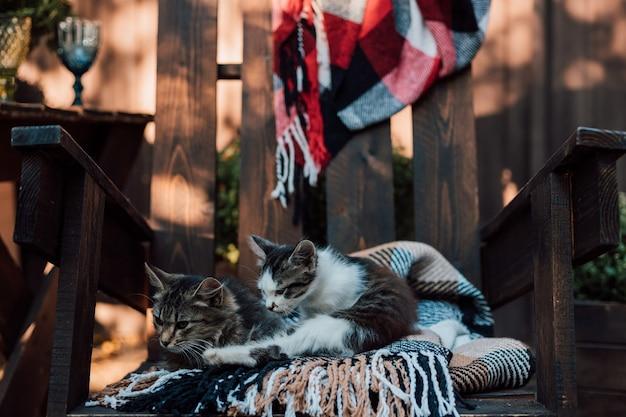 Twee kleine kittens koesteren zich in de tuin op een geruite deken