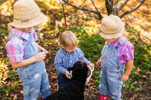 Twee kleine meisjes en babyjongen die zwart schapen bekijken en het voeden