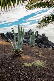 Twee kleine palmbomen groeien in een dorre zone