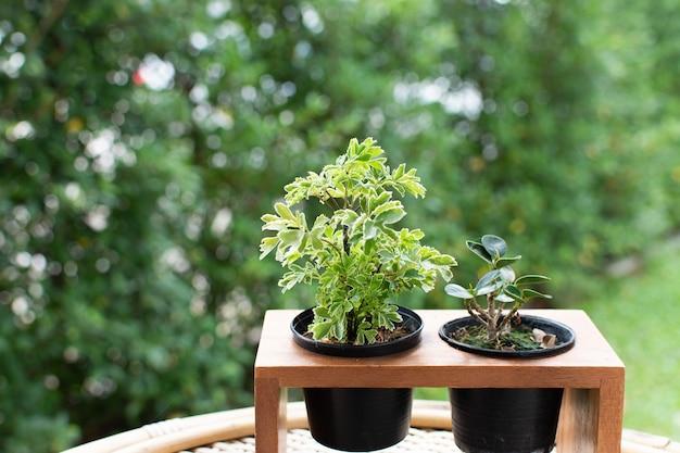 Twee kleine plantjes in een houten plantenpot.