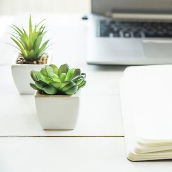 Twee kleine potten met vetplanten op de computer op het bureaublad