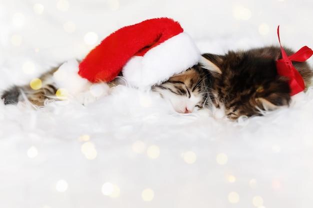 Twee kleine schattige driekleurige kerstkatjes in rode kerstmuts of pet en boog slapen met gesloten ogen en liggend op een witte deken. foto van ontspannen slapende nieuwjaarskat die bij elkaar ligt