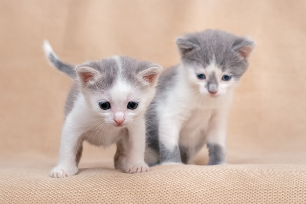 Twee kleine schattige kittens op een lichtoranje achtergrond.
