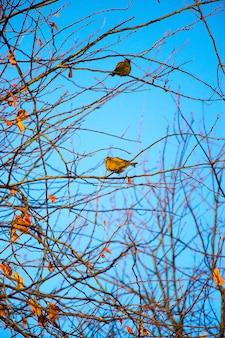 Twee kleine vogel mus zittend op takken tegen een heldere blauwe hemel