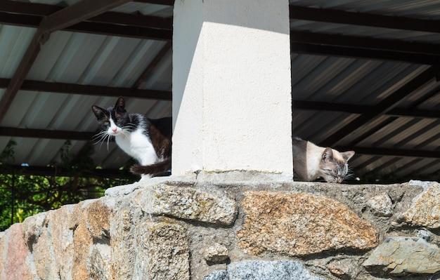 Twee knappe zwerfkatten die door een park lopen en naar de camera kijken.