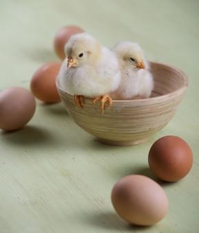 Twee kuikens en eieren in een kom