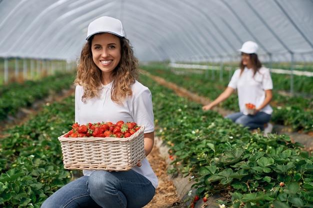 Twee lachende vrouwtjes oogsten aardbeien