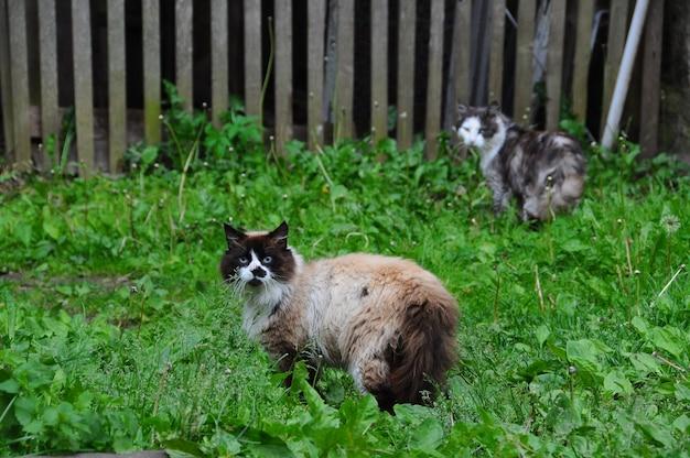 Twee landkatten lopen buiten op groen gras.