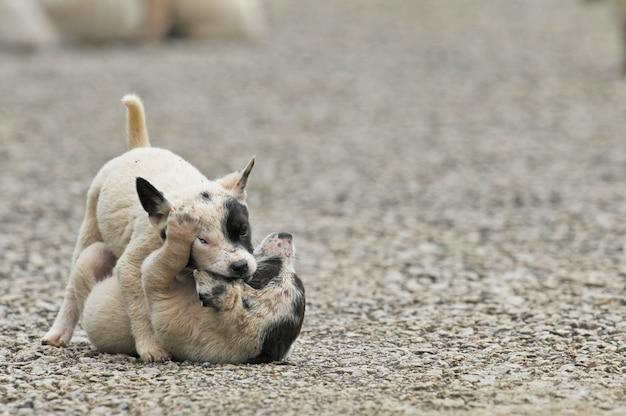 Twee lieve honden spelen