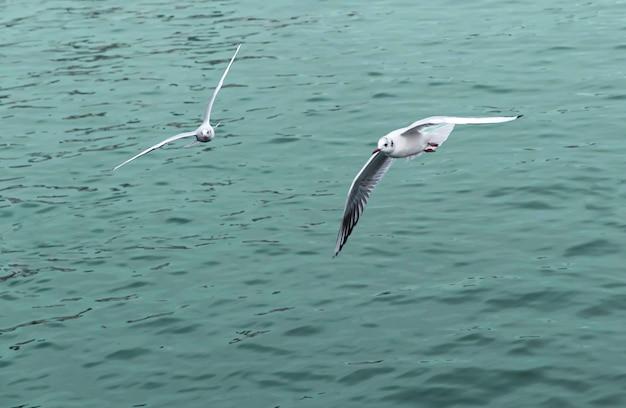 Twee meeuwen die 's middags in de zee vliegen.