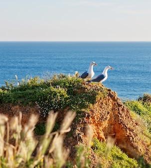 Twee meeuwen op een rotsachtige kust in het gras.