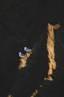 Twee meeuwen zitten op een donkere klif bij zonsondergang