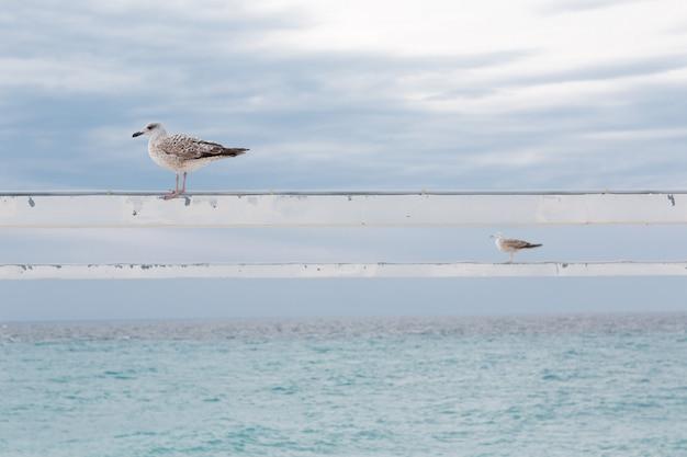 Twee meeuwen zittend op palen met uitzicht op zee