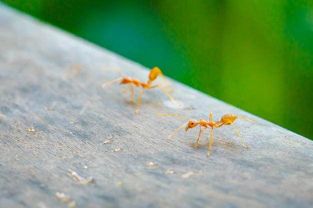Twee mieren staan op houten vloer