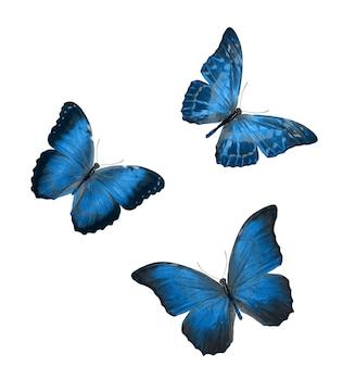 Twee mooie blauwe tropische vlinders geïsoleerd op een witte achtergrond. motten voor ontwerp
