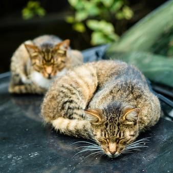 Twee mooie dakloze katten liggen en slapen in vuile auto met sporen van hun poten.